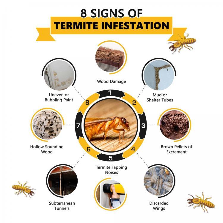 8-Signs-of-Termite-Infestation.jpg