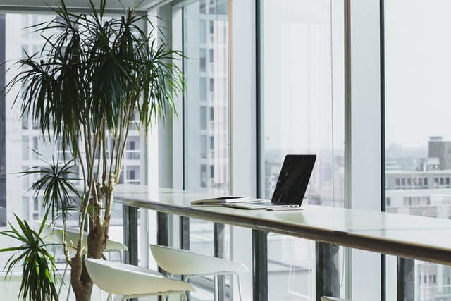plants in white office with windows