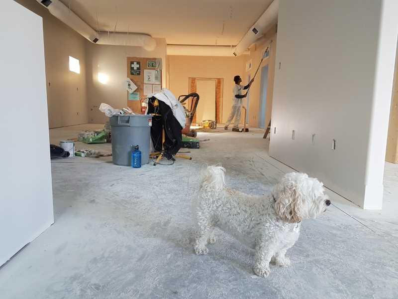 dog renovation house