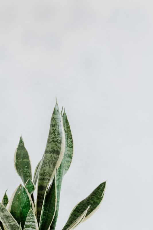Plant Power: 5 Bedroom Plants to Help You Sleep Better