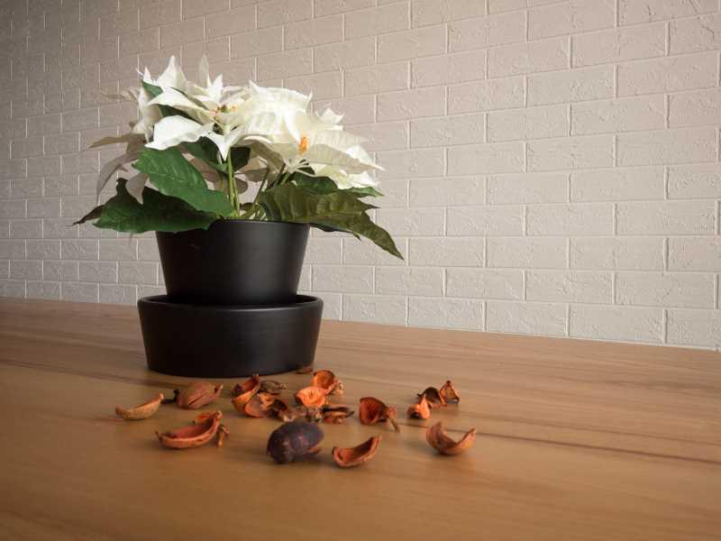 4 Budget-Friendly Home Renovation Ideas