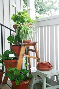 image for 8 Amazing Ideas For Your Garden