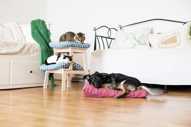 image for 3 Ways to Pet Proof your Home